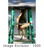 #1000 Picture of a Cat Stuck On a Ladder by Kenny Adams
