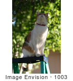 #1003 Picture of a Cat Looking Into a Tree From a Ladder by Kenny Adams