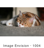 #1004 Picture of a Sleepy Cat Laying on the Floor by Kenny Adams