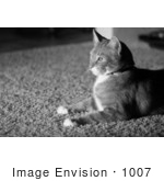 #1007 Black and White Picture of a House Cat Laying On Carpet by Kenny Adams