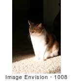 #1008 Picture of a Cat Sitting On Floor by Kenny Adams