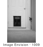#1009 Black And White Picture Of A Cat In A Hallway