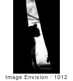 #1012 Picture of a Cat in a Window by Kenny Adams