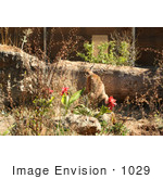 #1029 Photography of a Caracal in a Zoo by Kenny Adams