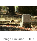 #1037 Photography of Cat Looking at Tombstone by Kenny Adams