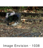 #1038 Picture of a Feral Cat Lying In-front of a Tombstone by Kenny Adams