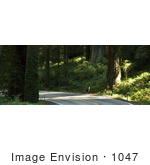 #1047 Photography Of A Country Road Through Redwoods