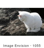 #1055 Picture Of A Stray White Cat Looking Down
