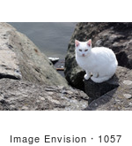 #1057 Picture of a White Cat Sitting on an Ocean Jetty by Kenny Adams
