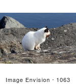 #1063 Picture Of An Ocean Cat