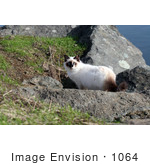 #1064 Picture Of A Cat Looking Back From Boulders
