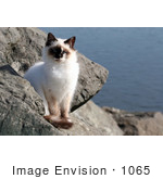 #1065 Picture of a Jetty Cat by Kenny Adams
