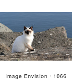 #1066 Photography Of A Gold Beach Oregon Cat