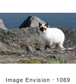 #1069 Picture Of A Stray Ocean Cat
