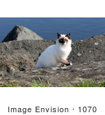 #1070 Picture Of A Homeless Mongrel Cat At The Rouge River