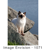 #1071 Picture Of A Homeless Kitten At The Rouge River