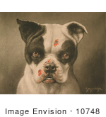#10748 Picture Of A Tough Dog With Bloody Scratches