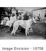 #10758 Picture Of A Russian Wolf Hound At A Mineola Dog Show