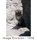#1076 Picture of a Brown Tabby Cat Behind a Boulder by Kenny Adams