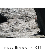 #1084 Picture Of A Tabby Cat Hiding Behind A Rock