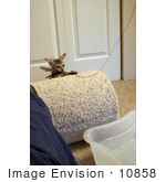 #10858 Picture Of An F4 Savannah Kitten Catching A Feather Toy