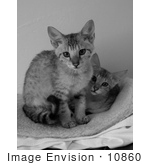 #10860 Picture Of Savannah Kittens - Black And White