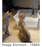 #10863 Picture Of F4 Savannah Kittens Playing