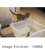 #10868 Picture Of An F4 Savannah Kitten Playing