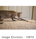 #10872 Picture Of An F4 Savannah Kitten Catching A Toy