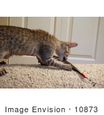 #10873 Picture Of An F4 Savannah Kitten With A Toy