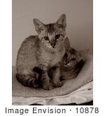 #10878 Picture Of Savannah Kittens - Sepia Toned