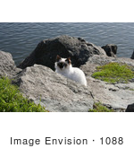 #1088 Image Of A Stray Cat At The North Jetty Cats Sanctuary