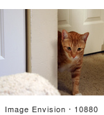 #10880 Picture of an Orange Cat by Jamie Voetsch