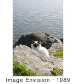 #1089 Image Of A Stray Cat At The North Jetty Cats Sanctuary