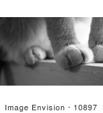 #10897 Stock Photo Cat'S Paws On A Window Sill