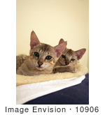 #10906 Picture Of Savannah Kittens On A Heating Pad