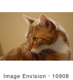 #10908 Picture of an Orange Cat by Jamie Voetsch
