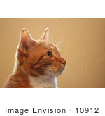 #10912 Picture Of A Frisky Orange Cat