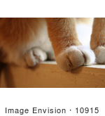 #10915 Picture Of A Cat'S Paws On A Window Sill