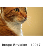 #10917 Picture Of An Orange Cat'S Face