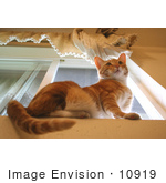 #10919 Picture Of An Orange Cat On A Window Sill