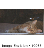 #10963 Picture of a Cat Looking Through Window Screen by Jamie Voetsch