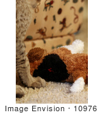 #10976 Picture Of A Kitten With A Stuffed Dog Toy