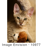 #10977 Picture Of A Kitten With A Stuffed Toy
