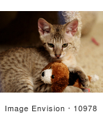 #10978 Picture of a Kitten Playing With a Toy by Jamie Voetsch