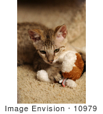 #10979 Picture Of A Kitten Playing With A Stuffed Dog Toy