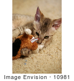 #10981 Picture Of A Cat Playing With A Stuffed Dog Toy