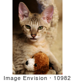 #10982 Picture Of A Kitten With A Stuffed Dog Toy
