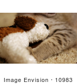 #10983 Picture of a Savanna Kitten With a Stuffed Doggie Toy by Jamie Voetsch