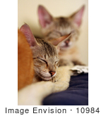 #10984 Picture Of Kittens Resting On A Heating Pad